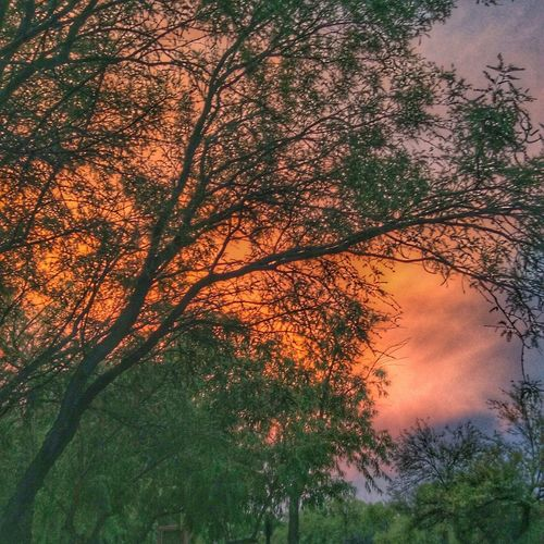 Tree Branch Sunset Beauty In Nature Scenics Growth Tranquility Orange Color Tranquil Scene Cloud - Sky Sky Nature Outdoors Non-urban Scene Day Dramatic Sky Cloudy Majestic WoodLand Atmospheric Mood Evening Sky Arizona Softness Tourism Journey