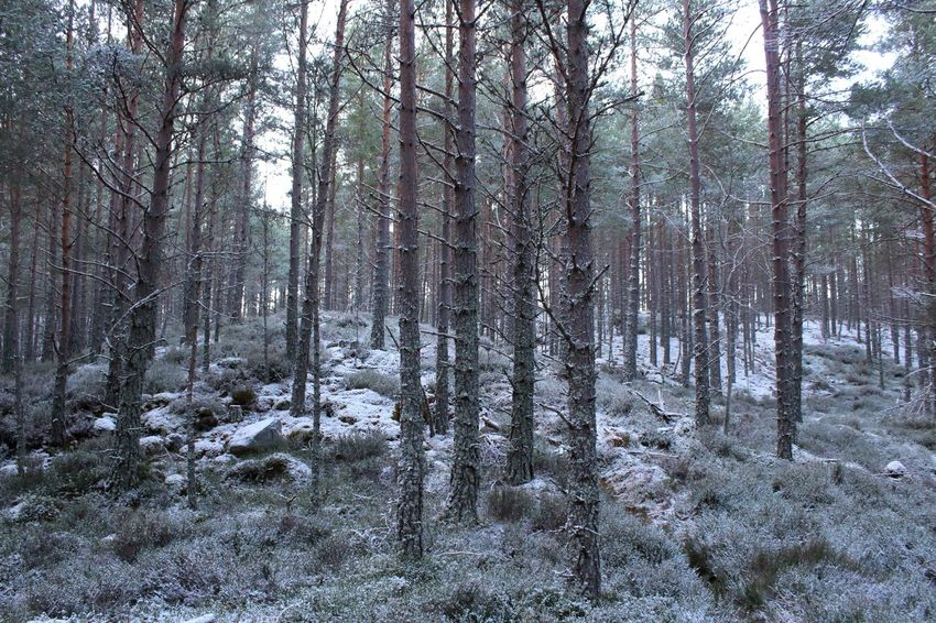 Loch An Eilein Scotland Shades Of Winter Beauty In Nature Cold Temperature Day Forest Growth Landscape Nature No People Outdoors Scenics Sky Snow Tranquil Scene Tranquility Tree Tree Trunk Winter