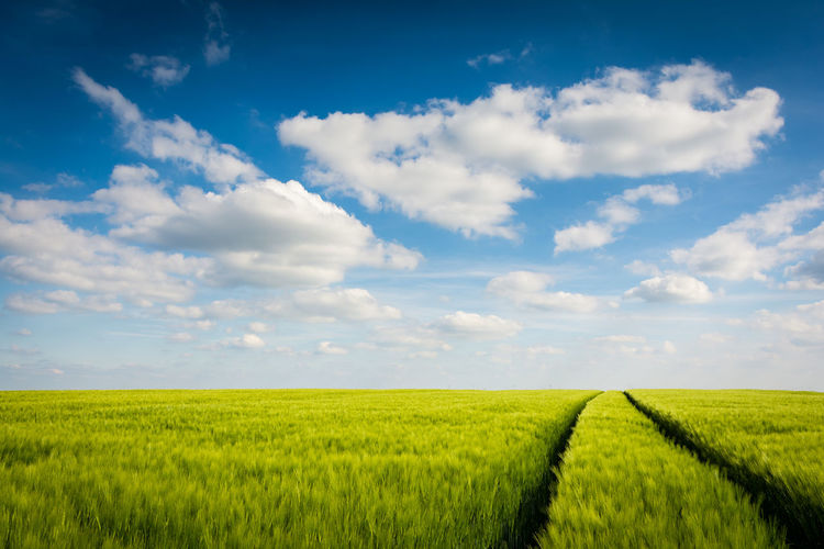 Green field on a day in summer Field Landscape Environment Agriculture Land Nature Outdoors Green Color Grain Crop  Corn Summer Germany Tranquility Horizon Over Land Sachsen-Anhalt Burgenlandkreis Freyburg