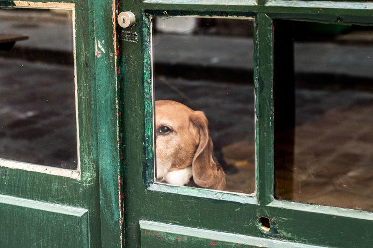 Portrait Of Dog Looking Through Glass Door