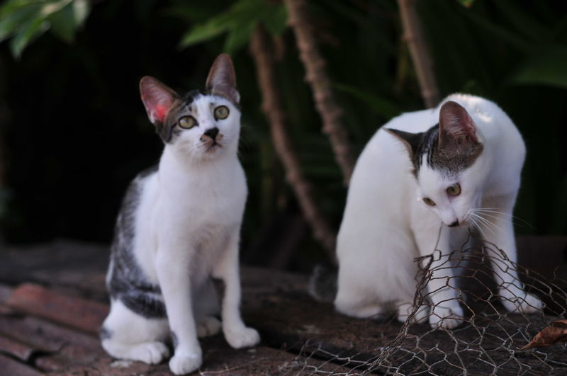 Close-up of cats sitting