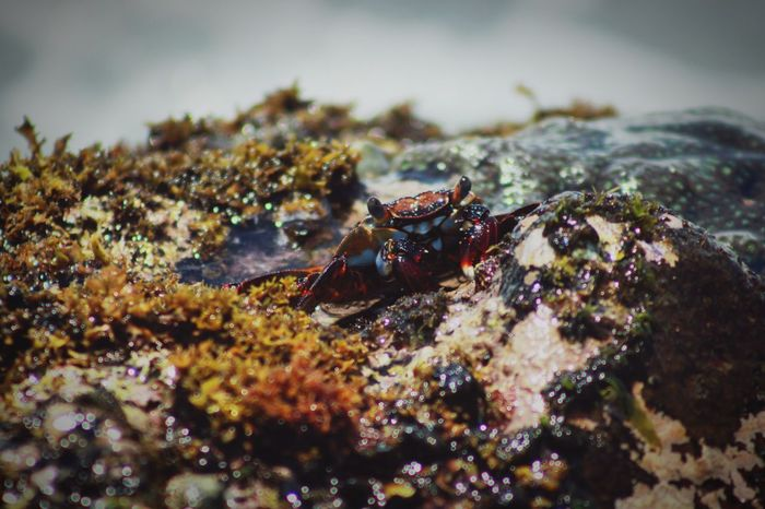 A small crap with a big hungry Animal Themes Animals In The Wild Animal Wildlife Nature Sea Sea Life Close-up Plant Photooftheday Underwater UnderSea One Animal Canon_photos Canon700D Canonphotography Water Awesome_shots Beauty In Nature Photographylovers Photography Is My Escape From Reality! Photography Themes Awesome_view Craps EyeEmNewHere EyeEm Best Shots