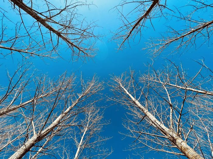 Low angle view of frozen bare trees against blue sky