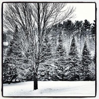 Just Black & White when it snows. #miltonvt #vt Landscape B Winter Snow Vermont Vt Btv Vt_scenery 802 Milton_vt Miltonvt Vt_scene
