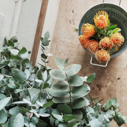 Pincushion Protea Flowers Florist Protea Protea Flower Proteas Protea Blossom Bouquet Bouquet Of Flowers Eucalyptus Plant High Angle View Directly Above Nature