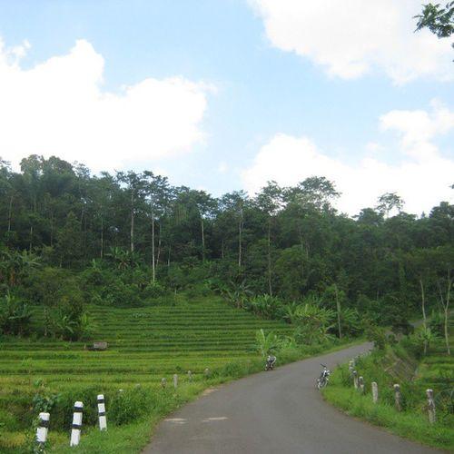 [ kedung malang ] Kedungmalang Wonotunggal Batang Centraljava indonesia instanusantara kkn ricefield sawah green