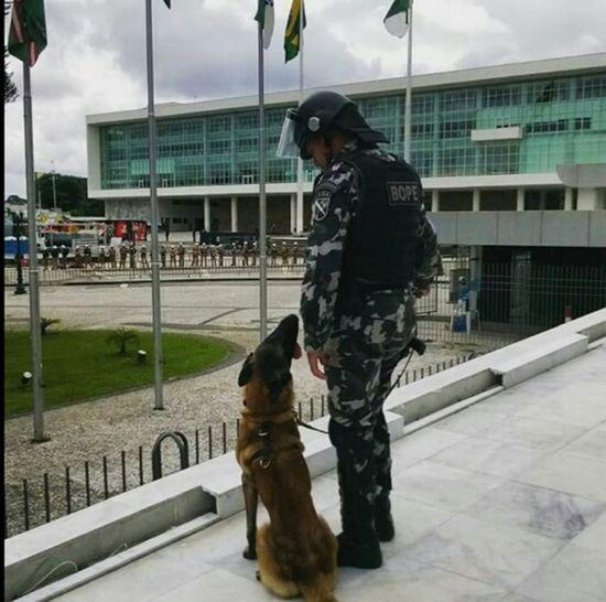 Honour Pride Paraná Segurança Publica Brazilian Police Dog K9 Police Dog Love It Curitiba