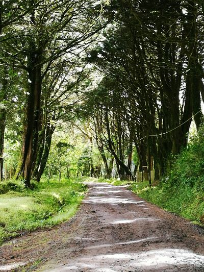 Bosque Costa Rica heredia Nature Tree Beauty In Nature Tranquility No People The Way Forward Green Color Forest Road Tranquil Scene First Eyeem Photo