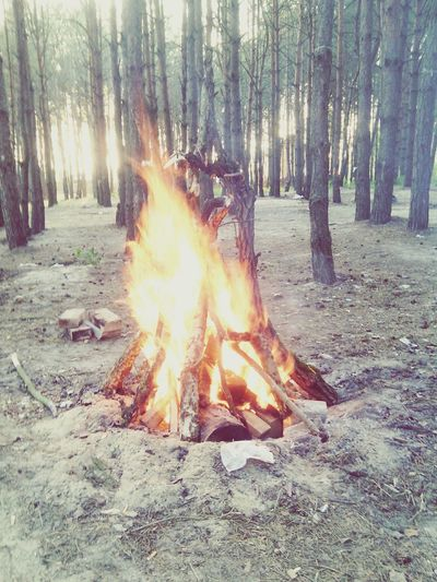 Tree Flame Burning Tree Trunk Forest Outdoors Nature No People WoodLand Heat - Temperature Bonfire Growth Day Sky