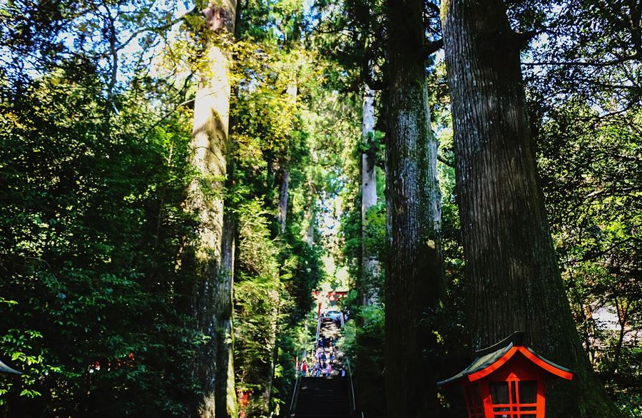 Hugging A Tree Naturelovers Japannes Temple Japanese Culture Hakone Temple From My Point Of View EyeEm Best Edits EyeEm Nature Lover