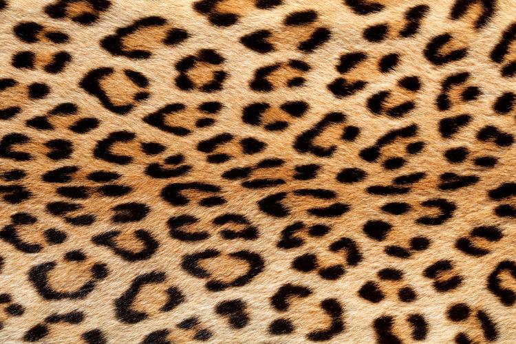Full frame shot of leopard print