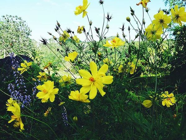 Appreciating the wildflowers and their glory Flowersoftheday Wildflowers Lovingnature Picoftheday Instalike IGDaily Likeforlike Like4like Vscoflowers Vscocam Vscophotography Sayhello