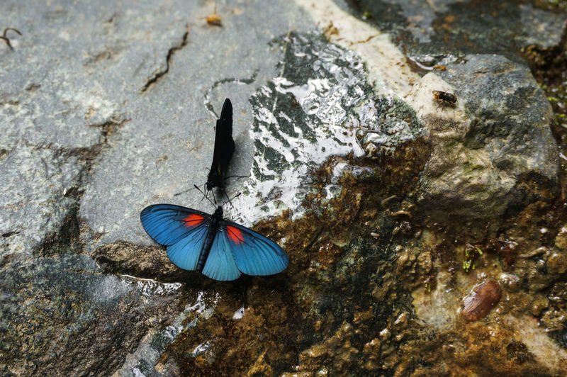 High Angel View Of Insect On Rock