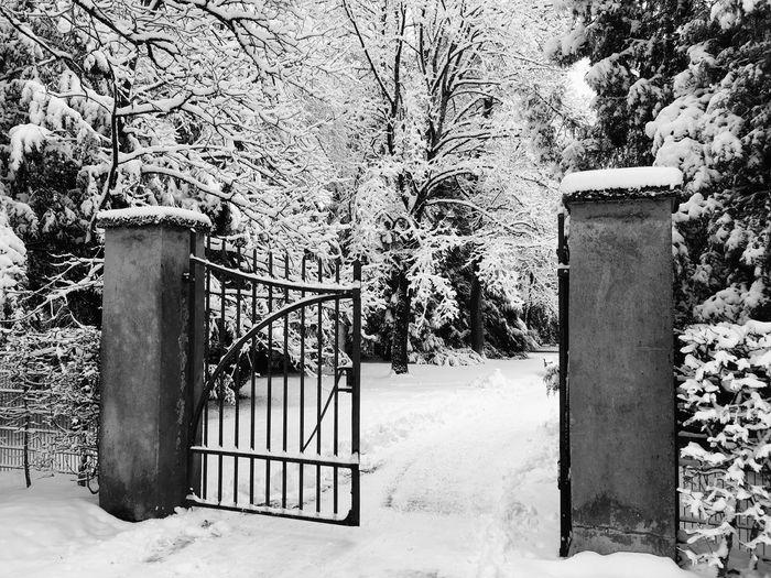 Gate Winter