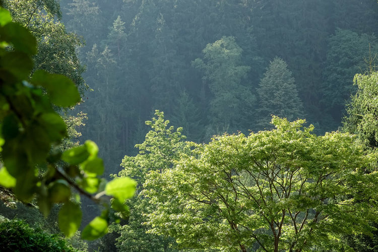 Sonnenschein  Baumwipfel Beauty In Nature Day Foliage Forest Green Color Growth Land Leaf Lush Foliage Mountain Nach Regen Nature No People Non-urban Scene Outdoors Plant Plant Part Rainforest Scenics - Nature Tranquil Scene Tranquility Tree Wald Und Torf