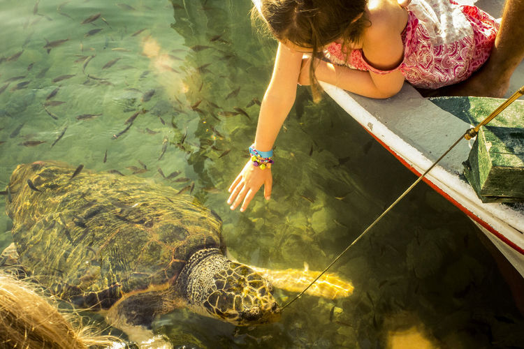 High angle view of girl reaching tortoise in lake