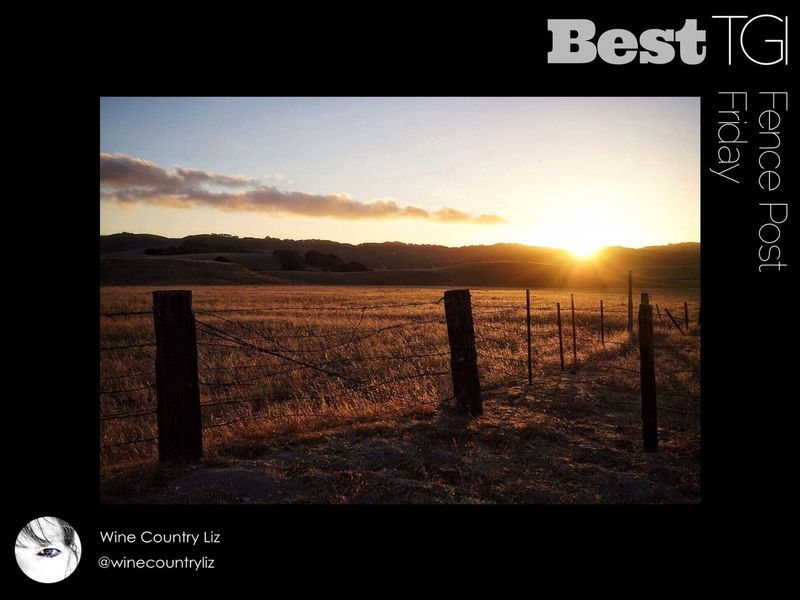 Another TGI Fence Post Friday has turn into Saturday and with that I want to congratulate Wine Country Liz as the Best TGI Fence Post Friday this week ... If you don't follow Liz I suggest you check out her GREAT gallery.