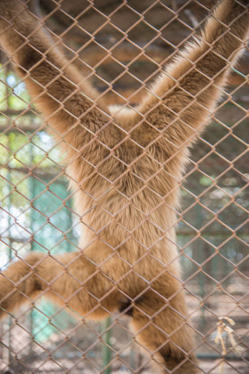 Zoo Animal Themes Animal Wildlife Animals In Captivity Animals In The Wild Brown Monkey Cage Mammal Monkey Monkey In Cage One Animal Outdoors Zoo