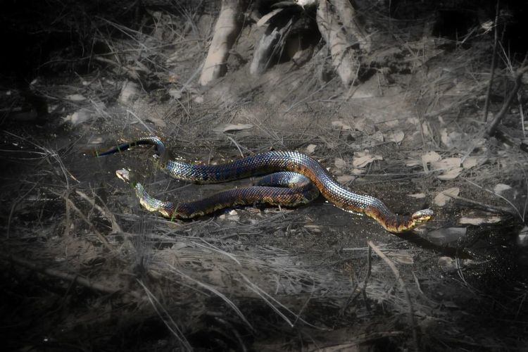 Snakes Wildlife & Nature Check This Out My Country Life