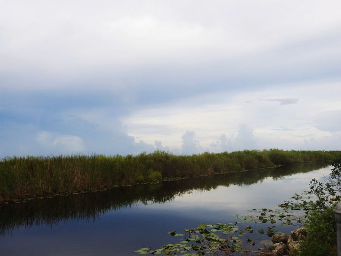 wetland Tree