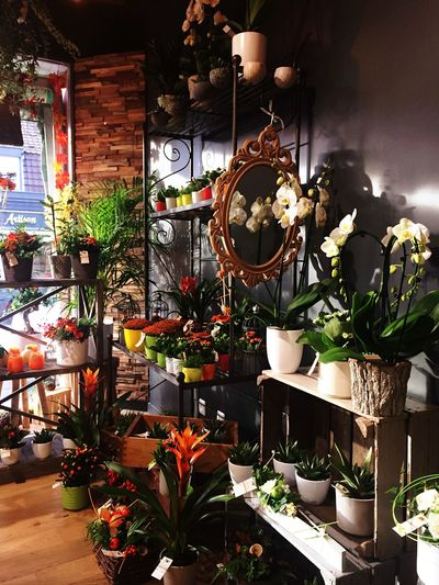 Plant No People Decoration Nature Potted Plant Store Indoors  Flowering Plant Flower Flower Arrangement Creativity Art And Craft