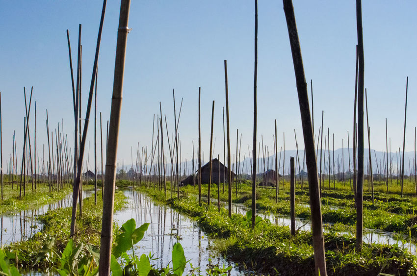 #birmania #burma #Inle Lake #Myanmar #Myanmar #water Inle Inlelake Myanmar Lake Reflection Myanmarphotos Myanmar View Water Reflections Birmania