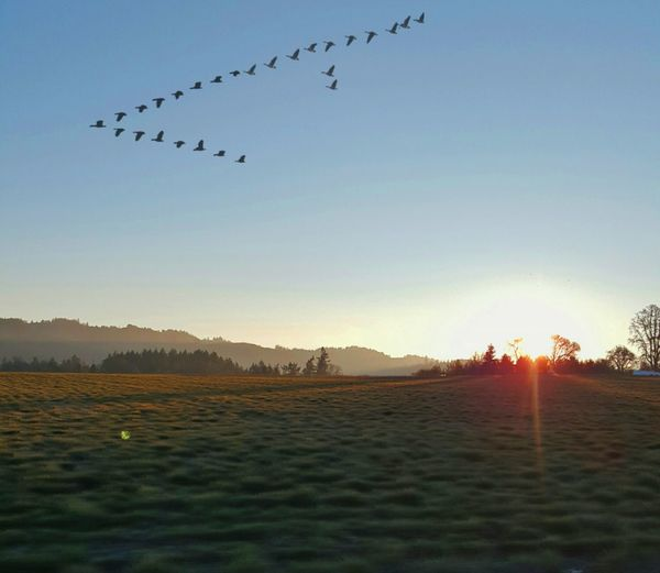 Geese on the move Morning Light Morning Sky Sun & Shade Countryside Rural Scene Idyllic Frosty Mornings Frosty Nature Nature Photography Sunrise Photography Oregon Sunrise The Oregon Connection Nature_collection Sunrise_Collection The Oregon Collection Bird Flying Flock Of Birds Mid-air Silhouette Water Sky Shining Spread Wings Sun Flight Streaming Avian Flapping Sunbeam Migrating My Best Photo