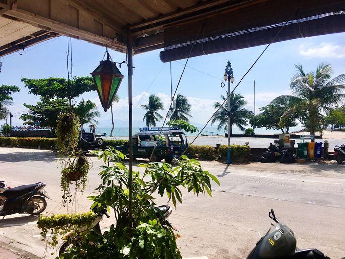 Palm Tree Transportation Mode Of Transport Car Land Vehicle Tree Day Beach Outdoors Sky Sunlight Nature