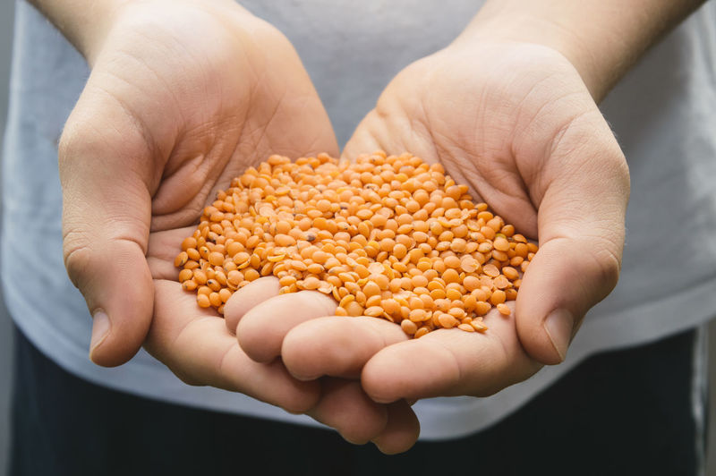 Midsection Of Man Holding Lentils