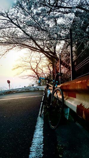 Cherry Blossoms Roadbike Nature Sunset Sun Clouds Skylovers Sky Nature Beautifulinnature Naturalbeauty Photography Landscape [ Osaka 大阪 Osaka 大阪 Sunset Sky Smartphonephotography Mobilephotography