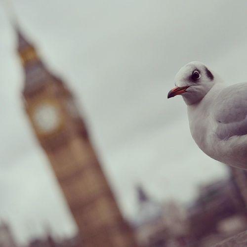 Sea gull alarm.