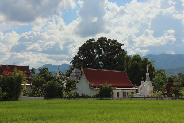 Fresh Green Grass Fresh Greens Rice Field Buddha Buddhist Temple Mountains Mountain Clouds Stupa Pai Thailand Thailand South East Asia Buddhism