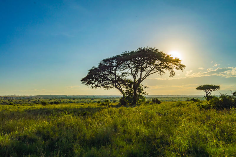 Sky Plant Tranquility Beauty In Nature Tranquil Scene Landscape Field Environment Scenics - Nature Tree Growth Land Non-urban Scene Grass Nature No People Green Color Sunset Sunlight Horizon Over Land Outdoors Nairobi NairobiKenya Nairobi National Park Nairobi Kenya