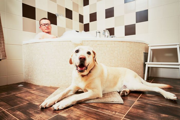 Living with dog. Young man relaxing in bathroom with his yellow labrador retriever. Animal Themes Bath Bathroom Bathtub Brown Cute Design Dog Dog Love Dogslife Domestic Animals Friendship Handsome Home Indoors  Interior Design Labrador Loyalty Man People Pets Relaxation Resting Tile Togetherness
