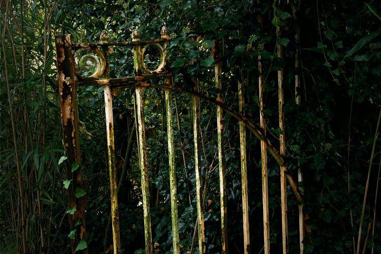 EyeEm EyeEm Market © EyeEm Masterclass EyeEm Nature Lover EyeEm Selects EyeEm Gallery EyeEmBestPics Broken Close-up Day Fence Green Color Growth Nature No People Old Outdoors Popular Photos Rusty