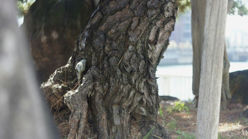 Tree Day OSAKA Industar-50 3,5/50 City Life Nex5 Old Lens Photo INDUSTAR