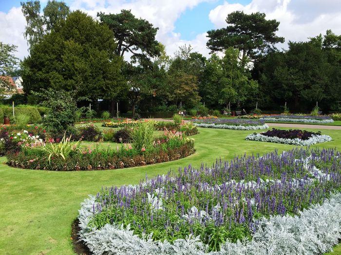 Garden Bury St Edmunds. Suffolk