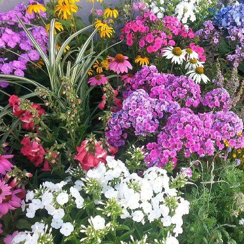 B wie bunt gemischt Blumenmeer Soarbeiteich ABCFee @feemail