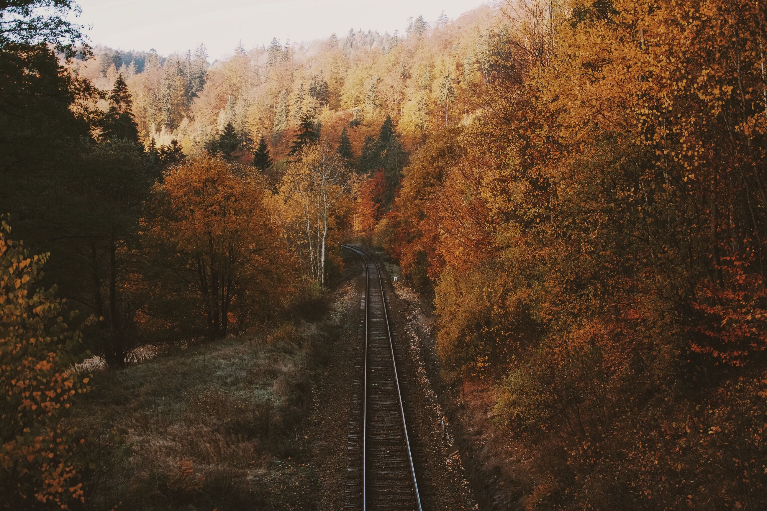 the way forward, transportation, tree, diminishing perspective, vanishing point, tranquility, railroad track, tranquil scene, nature, road, landscape, beauty in nature, rail transportation, forest, scenics, non-urban scene, outdoors, growth, sky, day