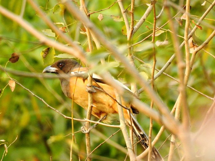 Bird Photography Bird Hiding In The Wood Animal Wildlife Animals In The Wild One Animal Nature Plant No People Day Branch Tree Beauty In Nature Animal Themes