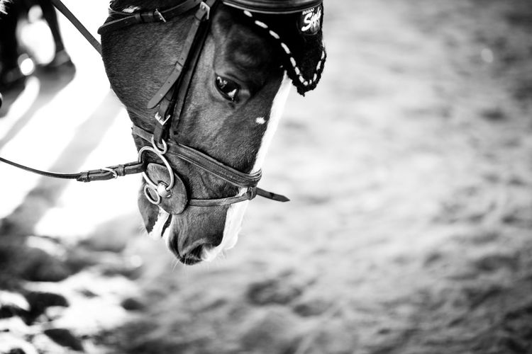 Cheval Faces Of EyeEm Caballos Horse Photography  Showjumping
