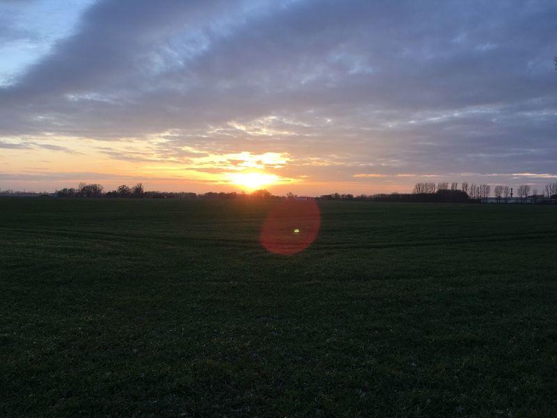 Field Sunset Grass Landscape Nature Beauty In Nature Sun
