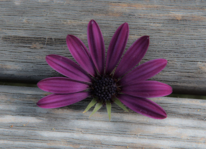 10 Beauty In Nature Close-up Directly Above Flower Flower Head Flowering Plant Fragility Freshness Nature Number Petal Pink Color Pollen Purple Ten Vulnerability  Wood Wood - Material