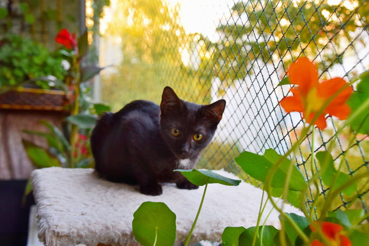 Black cat standing in a flower