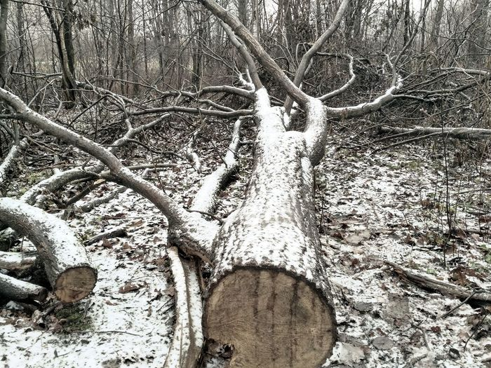 Close-up of bare tree in snow