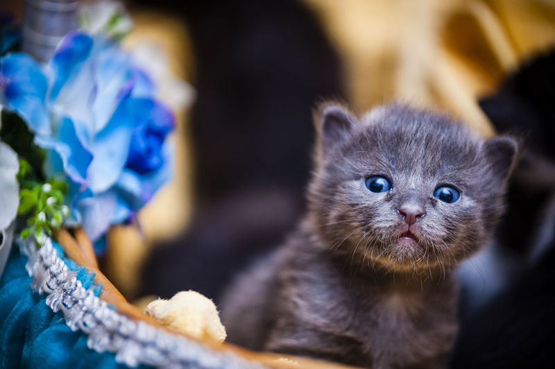Close-up of kitten
