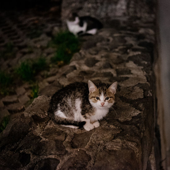 A stray kitten looks straight at the camera Animal Themes Cat Feline Kitten Looking At Camera Night No People One Animal Sitting Stray Cat