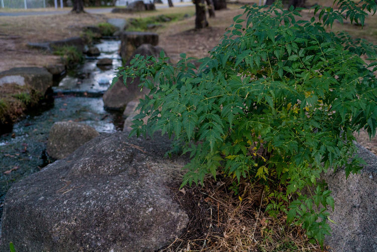 Plant Growth Nature No People Green Color Day Plant Part Leaf Rock Solid Focus On Foreground Water Rock - Object Beauty In Nature Outdoors Stone Tranquility Land High Angle View Flowing Water Autumn Mood Autumn Greem Streetphotography Morning