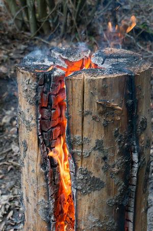 Fire Feuerstelle Brennendes Holz Burning Wood Flame Flamme
