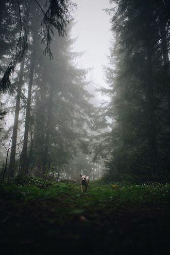 View of a dog in forest